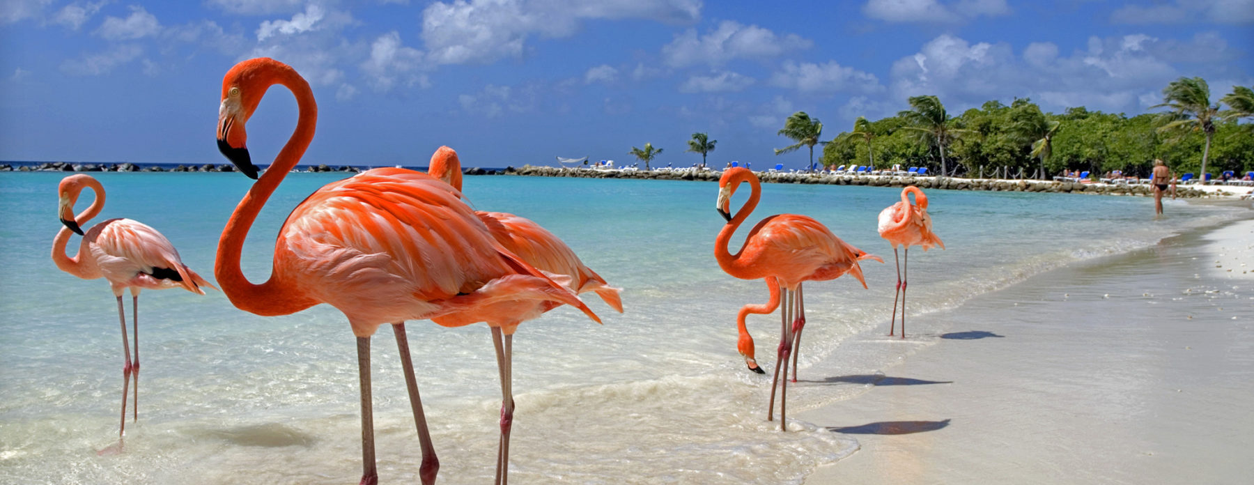 Fancy S First Cruise The Bahamas Now Sailing March 1 To 4th Come
